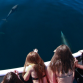 Malibu Coastal Adventures : Boat Adventures, Paddleboarding Lessons, Surfing Lessons, Fishing, Diving...