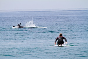 paddlewithdolphins