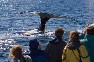 whalewatch1